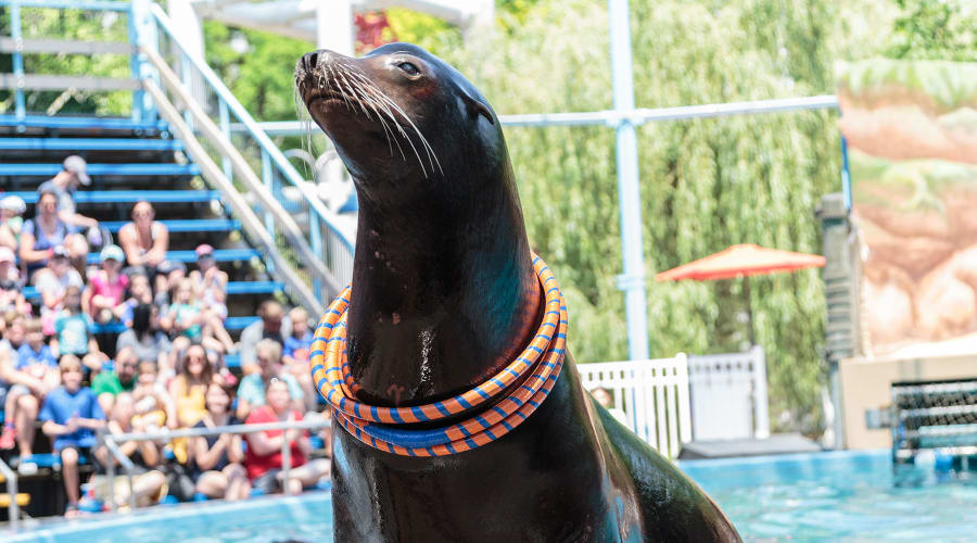 Seal From Our Friends From The Sea