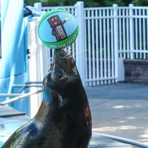 Seal From Flippered Friends And Family Experience